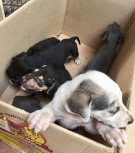 Puppies in Box